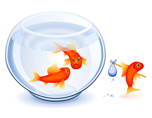 Goldfish moving from his fishbowl with bundle